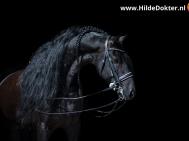 Hilde Dokter Paardenfotografie - Blackfoto - 1
