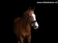 Hilde Dokter Paardenfotografie - Blackfoto - 12