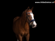 Hilde-Dokter-Paardenfotografie-Blackfoto-12