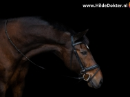 Hilde Dokter Paardenfotografie - Blackfoto - 14