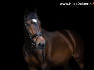 Hilde Dokter Paardenfotografie - Blackfoto - 15