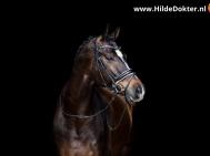 Hilde-Dokter-Paardenfotografie-Blackfoto-16