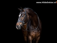 Hilde-Dokter-Paardenfotografie-Blackfoto-17