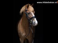 Hilde-Dokter-Paardenfotografie-Blackfoto-19