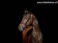 Hilde Dokter Paardenfotografie - Blackfoto - 2