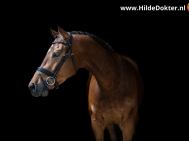 Hilde-Dokter-Paardenfotografie-Blackfoto-21