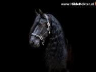 Hilde-Dokter-Paardenfotografie-Blackfoto-22