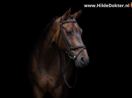 Hilde Dokter Paardenfotografie - Blackfoto - 5