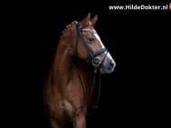 Hilde Dokter Paardenfotografie - Blackfoto - 6