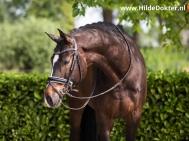 Hilde Dokter Paardenfotografie - Portretfoto's - 12