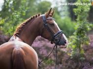 Hilde Dokter Paardenfotografie - Portretfoto's - 2