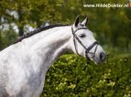 Hilde-Dokter-Paardenfotografie-Portretfotos-23