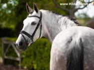 Hilde-Dokter-Paardenfotografie-Portretfotos-24