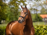Hilde-Dokter-Paardenfotografie-Portretfotos-25