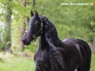 Hilde-Dokter-Paardenfotografie-Portretfotos-27