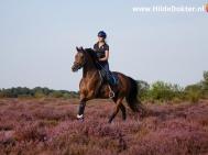 Hilde Dokter Paardenfotografie - Rijfoto's - 1