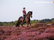 Hilde Dokter Paardenfotografie - Rijfoto's - 12