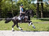 Hilde-Dokter-Paardenfotografie-Rijfotos-18