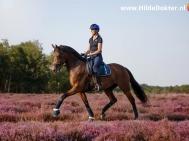 Hilde Dokter Paardenfotografie - Rijfoto's - 2