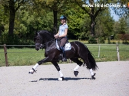 Hilde Dokter Paardenfotografie - Rijfoto's - 4