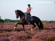 Hilde Dokter Paardenfotografie - Rijfoto's - 5